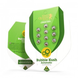 BUBBLE KUSH Autofloraisons