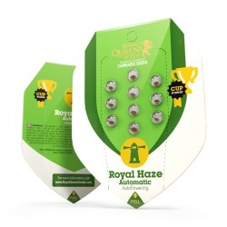 ROYAL HAZE Autofloraisons