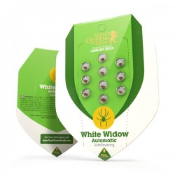 WHITE WIDOW Autofloraisons