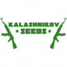 NORTHERN RUSSIAN Autofloraisons - KALASHNIKOV SEEDS