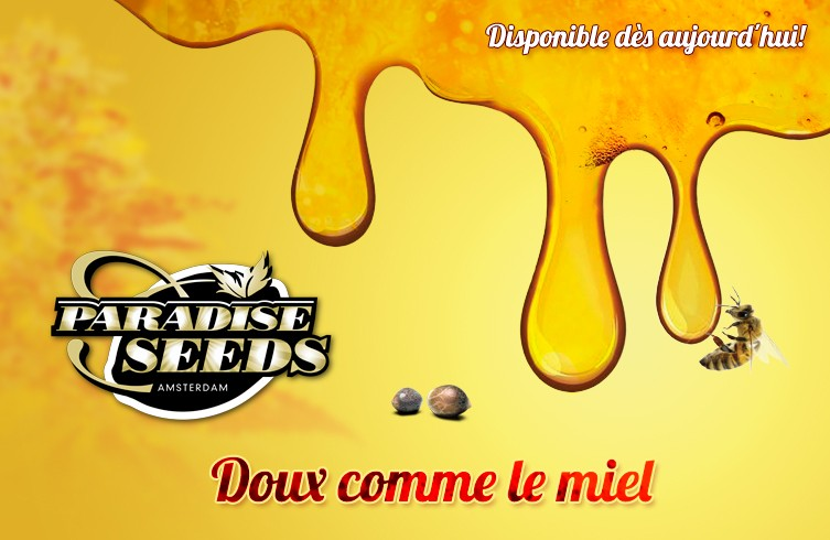 GRAINES DE CANNABIS DE COLLECTION PARADISE SEEDS