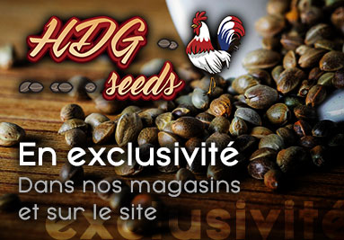 hdg seeds exclusivité en france